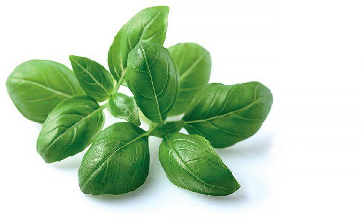 Click And Grow Smart Garden Refill 3-pack - Basilika
