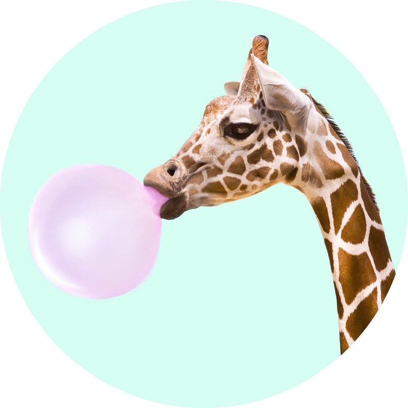 PopSockets Animal - Born free